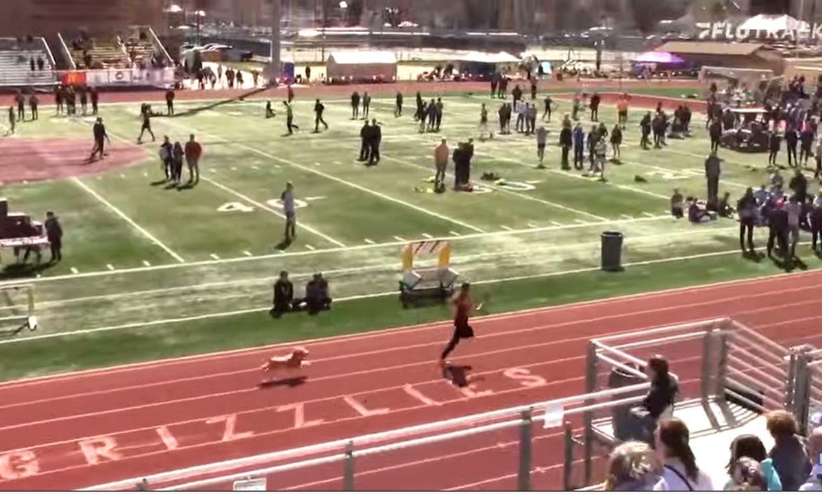 Un câine a intrat pe pista de atletism, printre sportivi, și a câștigat cursa