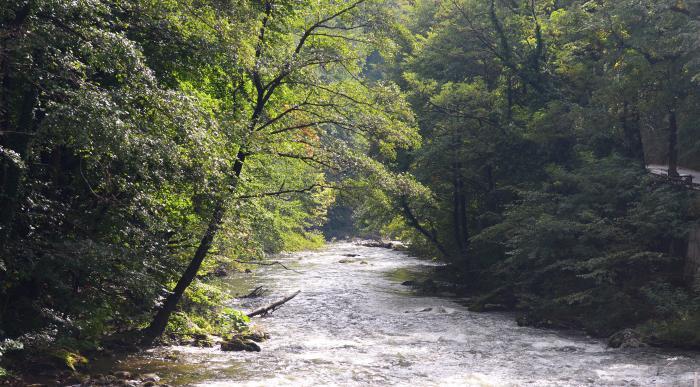 Un copil de trei ani s-a înecat în râul Cerna, în Duminica Floriilor