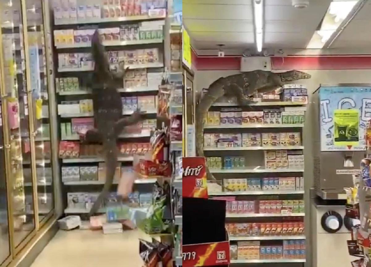 Oamenii au comparat-o cu Godzilla