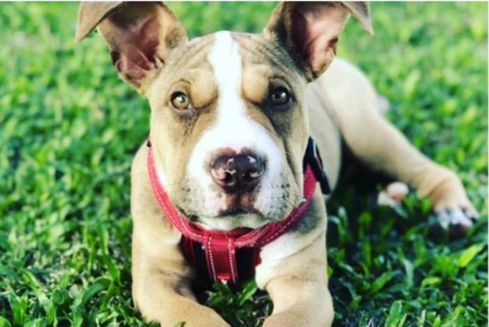 Așa arată în prezent unul dintre câini, la câteva săptămâni de la salvarea sa