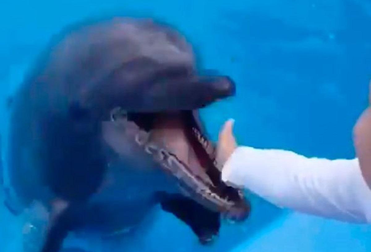 Copil de şase ani în lacrimi, după ce a fost muşcat de un delfin. Îi confundase mâna cu o gustare, în Ucraina