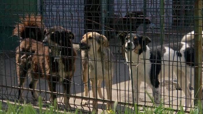 Mai mulţi câini comunitari din Motru ar fi fost eutanasiaţi