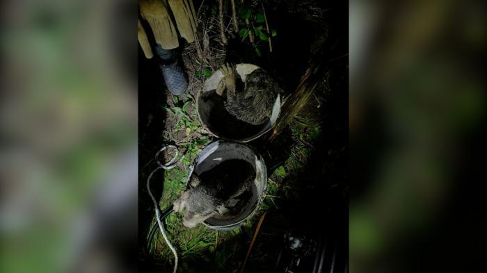Căței salvați de la moarte de pompieri dintr-o fântână adâncă de cinci metri