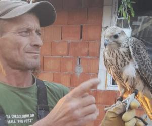 Zeci de mii de euro, picaţi din cer în curtea unui bărbat din Arad. Un uliu de vânătoare, extrem de valoros, a zburat din Slovacia până în România