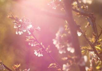 Vremea 12 aprilie 2021. Va fi frumos și cald afară, temperaturile maxime ating 22 de grade Celsius